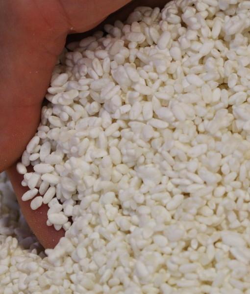 Rice Koji 03